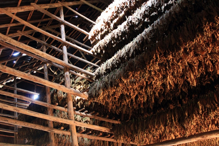Tobacco-drying-hut,-Vinales,-Cuba